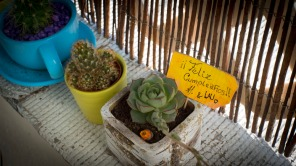 My cute succulent from Laura and Alejandro :)